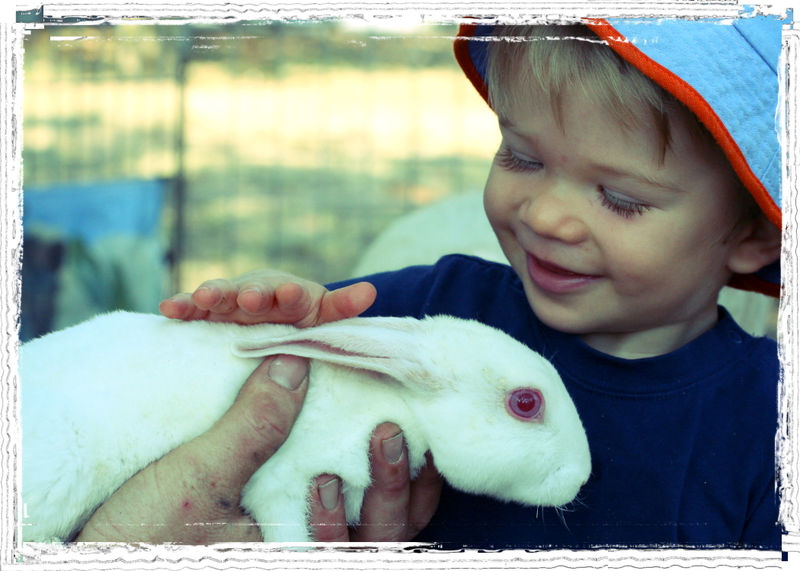Joshua Petting Zoo