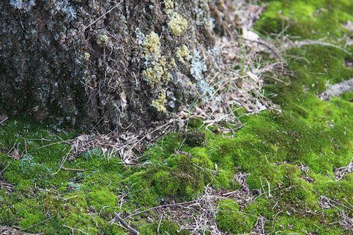 Moss&Bark