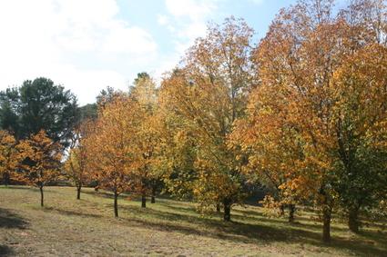 Autumn_days
